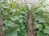 Produkcja roślinna