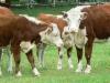 Produkcja mięsna