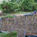 Budowa filtra roślinnego w gruncie- oczyszczalnia dla DPSu (warmińsko-mazurskie)